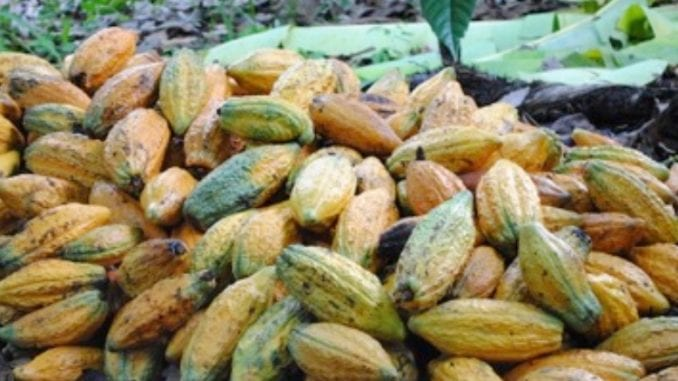 Terroir By Onyx Coffee Creates New Income Sources For Farmers