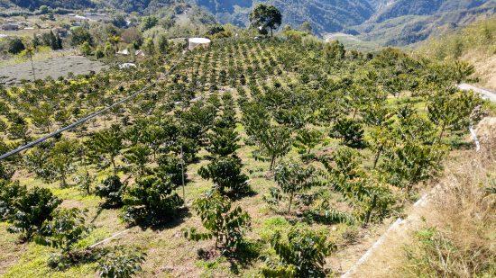 La subasta de café de Taiwán ofrece lo mejor del país